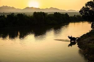 una silhouette di un elefante che fa il bagno nel fiume al mattino