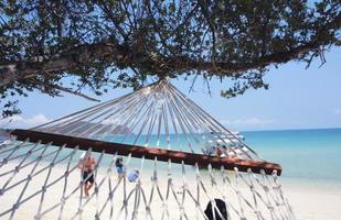 primo piano di un'altalena sotto un albero in spiaggia