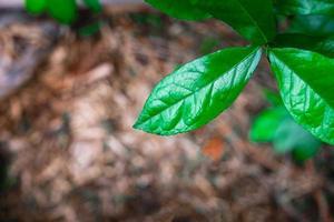 foglie verdi nella foresta pluviale foto