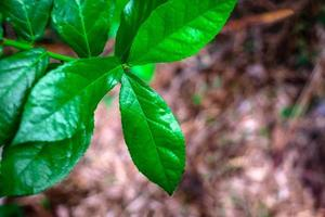foglie verdi vibranti foto