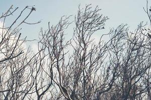 immagine di rami morti e sole tra le nuvole foto