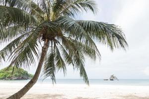 palma da cocco in spiaggia foto