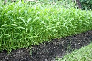 piante verdi in un giardino