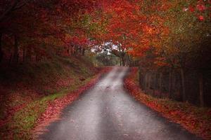 bella strada forestale autunnale in spagna foto