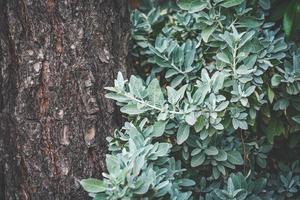 cespuglio verde che cresce accanto a un albero di pino foto