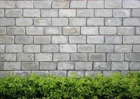 muro di mattoni grigi e siepe verde foto