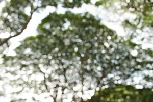 sfondo sfocato bokeh albero foto