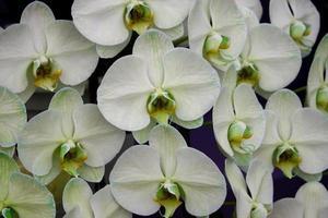 primo piano delle orchidee foto