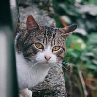 ritratto di gatto randagio grigio