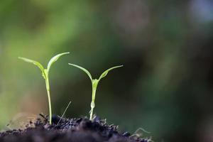 primo piano di giovani germogli in crescita