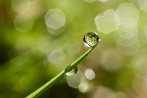 goccia d'acqua sul filo d'erba verde foto