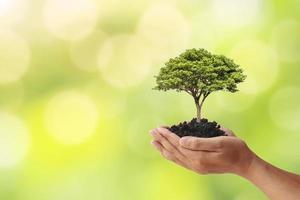 mano che tiene un albero su sfondo sfocato natura verde, piantare idee e giornata della terra