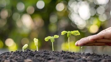 le mani delle persone che innaffiano piccole piante e il concetto di cura dell'ambiente e la giornata mondiale dell'ambiente