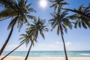 alberi di cocco di fronte all'oceano foto
