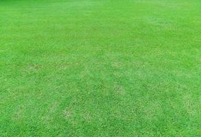 sfondo di erba verde brillante foto