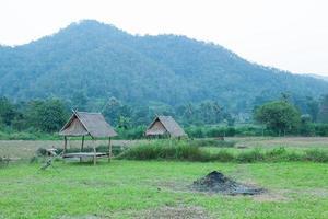 capanne sul campo nella Thailandia rurale foto