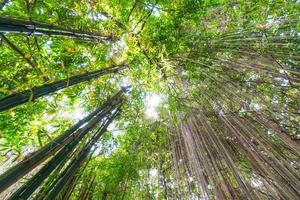 foresta di bambù in giappone foto