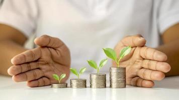 l'albero cresce sul mucchio delle monete e gli investitori le proteggono con le mani, idee per startup e investimenti foto