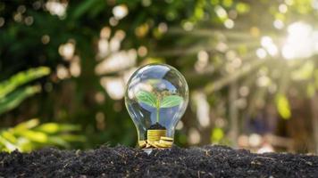 i bulbi si trovano a terra con gli alberi che crescono con i soldi sotto la luce, concetto di risparmio energetico, protezione ambientale e riscaldamento globale foto