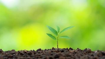 piccoli alberi con foglie verdi, crescita naturale e luce solare, il concetto di agricoltura e crescita sostenibile delle piante foto