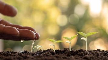 coltivare colture su un terreno fertile e annaffiare le piante, inclusa la visualizzazione delle fasi di crescita delle piante, concetti di coltivazione e investimenti per gli agricoltori foto