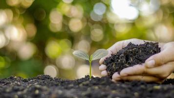 primo piano di una mano umana che tiene una piantina tra cui piantare piantine, concetto della giornata della terra, campagna di riduzione del riscaldamento globale e gestione dell'equilibrio ecologico
