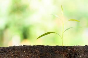 albero che cresce su sfondo naturale