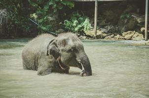 elefantino divertiti a giocare con l'acqua nei torrenti dei fiumi