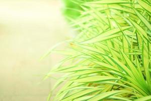 primo piano di erba verde con sfondo sfocato foto