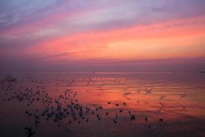 stormo di uccelli al tramonto