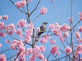 uccello appollaiato su albero fiore rosa