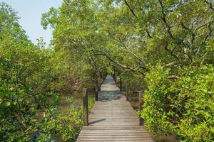 passerella in legno attraverso una foresta foto