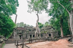 Tempio di ta prohm ricoperto di alberi ad angkor, siem reap, cambogia