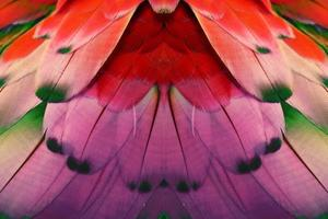 piume colorate per sfondo o texture foto