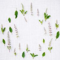 cerchio di foglie fresche di basilico santo foto