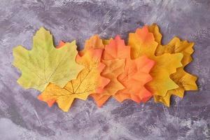 foglie di acero autunnali isolate su sfondo di ardesia, dall'alto in basso foto