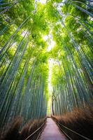 boschetto di bambù nella foresta ad arashiyama, kyoto foto