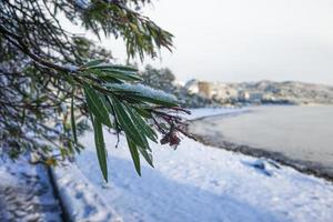 neve sugli alberi e sulla spiaggia vicino al Mar Nero foto