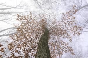 prospettiva sotto un albero