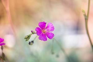 primavera a saint louis foto