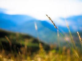 erbe in un prato foto