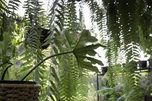 bellissimo giardino estivo verde foto