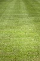 primo piano del campo in erba foto