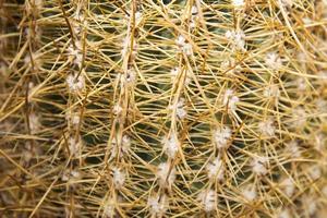 primo piano del cactus foto