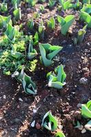 germogli di piante e piante giovani con dettagli macro