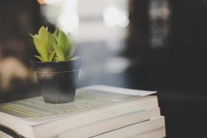 libri e cactus al caffè foto