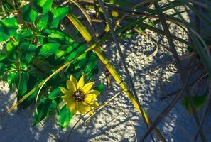 un fiore giallo accanto a foglie verdi sulla spiaggia