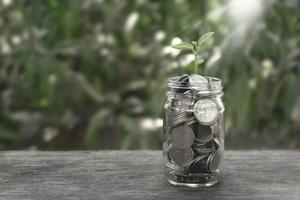 monete di piante in crescita in una bottiglia foto