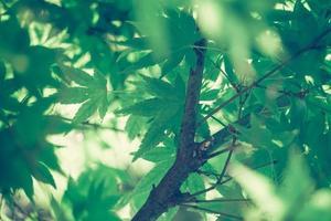 messa a fuoco selettiva della bellissima cornice verde foglia di natura foto