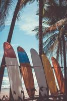 molte tavole da surf accanto agli alberi di cocco in spiaggia estiva con la luce del sole e il cielo blu foto